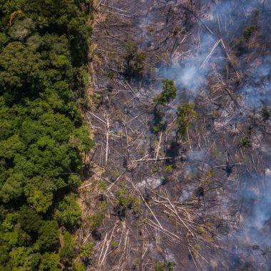 MIT-Trained Physicist Fired in Brazil in Spat Over Deforestation